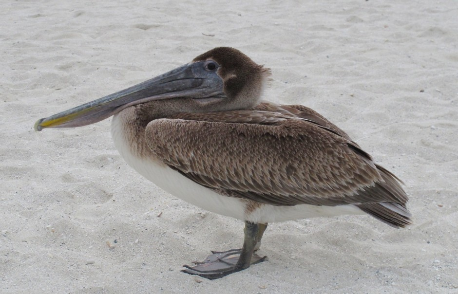 A friendly pelican in Cuba. I hope it makes you smile too.